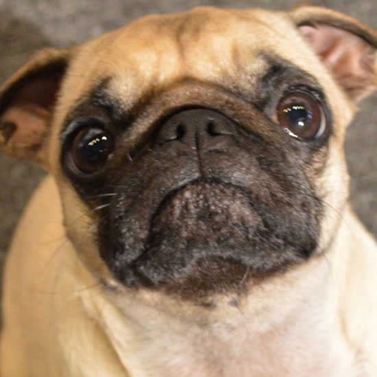 Meet the Best DJs In Pittsburgh, and Morgan the Pug.